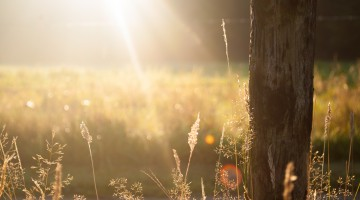 sun-trees_medium