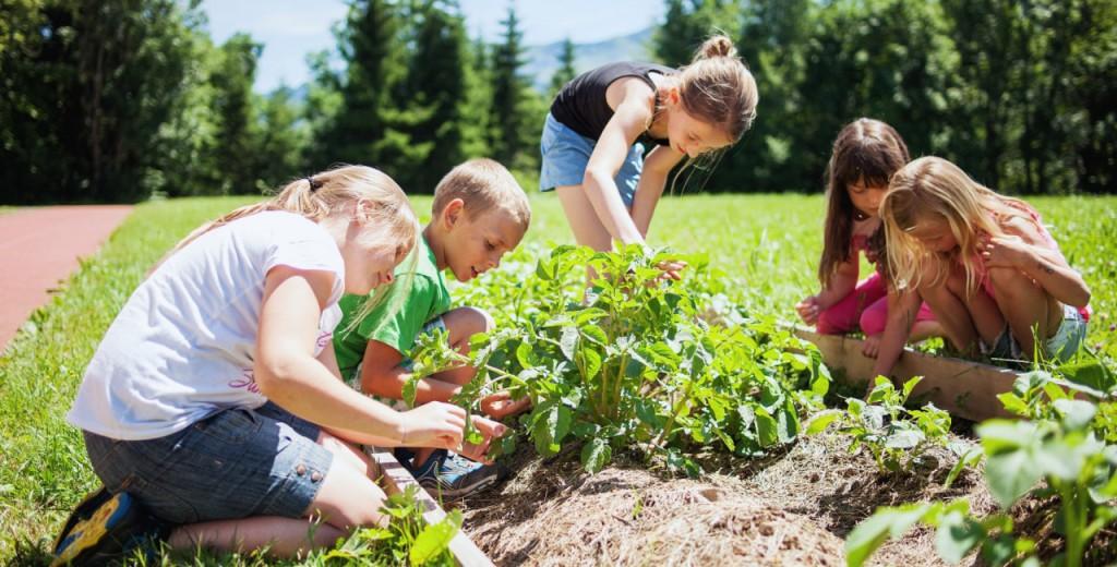 Projekt Gemeinschaftsgarten in Hittisau, Foto: Markus Gmeinder