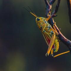 Insekten sind nicht für den Klimawandel verantwortlich.