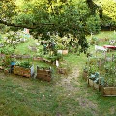 Gemeinschaftsgärten sind dem Stadium der Nische entwachsen und wurden bereits in zahlreichen Gemeinden etabliert. Bildnachweis: wikimedia.org / Nifoto
