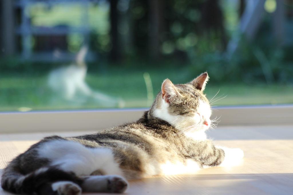 Auch die Katze sollte sich im neuen Zubau wohlfühlen, für den die Partnerbetriebe Traumhaus Althaus in einer Koproduktion gesorgt hatten. Bild: privat