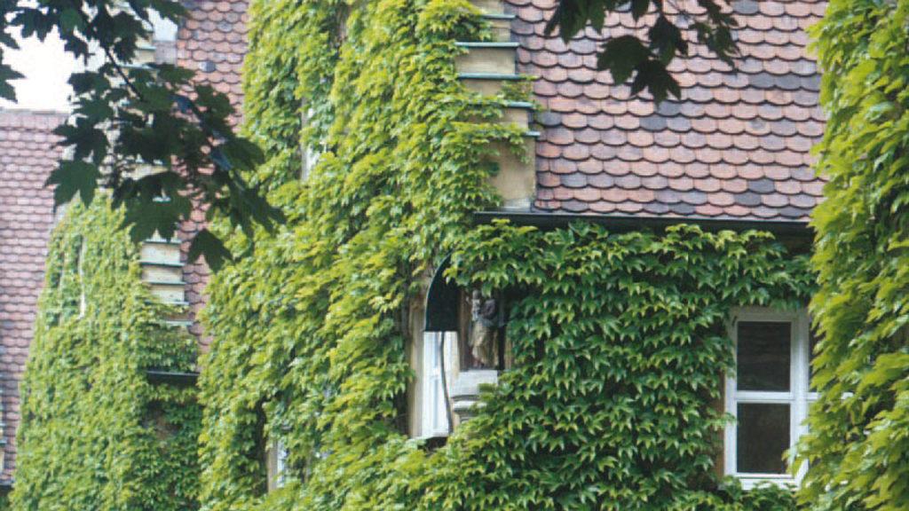 Eine begrünte Fassade dient im Sommer als Klimaanlage.