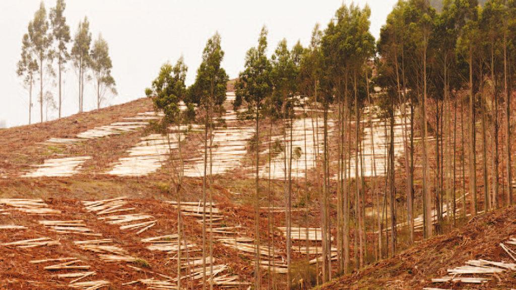 »Diese Art Waldbewirtschaftung sollten Sie nicht unterstützen. Achten Sie deshalb auf zertifiziert nachhaltige Holzprodukte, zum Beispiel mit dem FSC-COC-Zertifikat. Bild: PiLensPhoto - stock. adobe.com