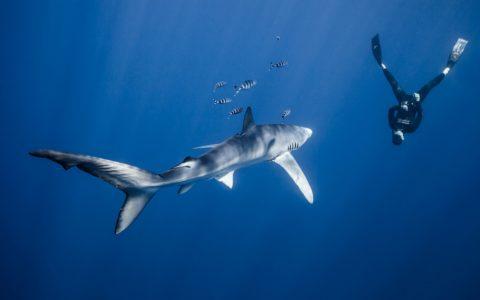 Freitaucher und Haiforscher Lukas Müller sorgt für einen besonderen Einstieg in Vorarlbergs erste Klimaconvention für alle zwischen 15 und 20. Bild: Lukas Müller