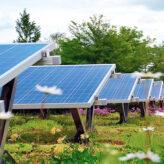 Gründach und Photovoltaik_cr Paul Bauder.jpg