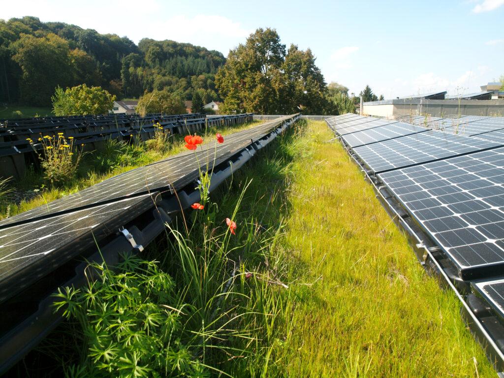 Gründach und Photovoltaik_Hallenbad Muttenz_cr Stephan Brenneisen